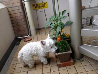 2012_june_071